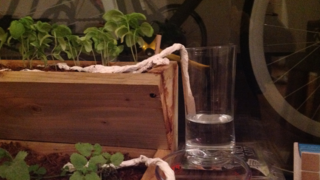 Paper towel trick for your plantes
